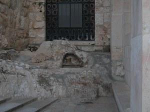 Particolare del giardino del Getsemani